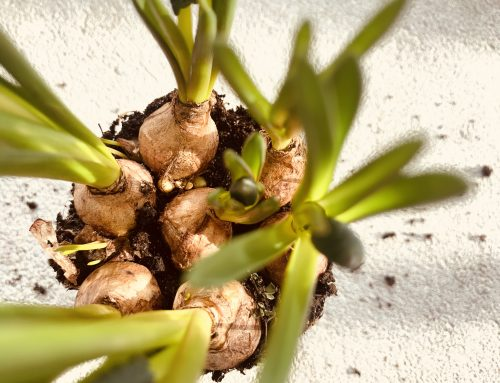 Gärtnern mit Kindern – 3 Tipps