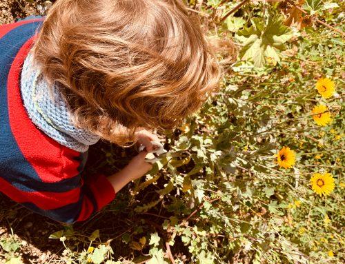 Frühling in der Natur entdecken mit Kindern